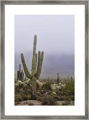 A Little Desert Fog  Framed Print by Saija Lehtonen