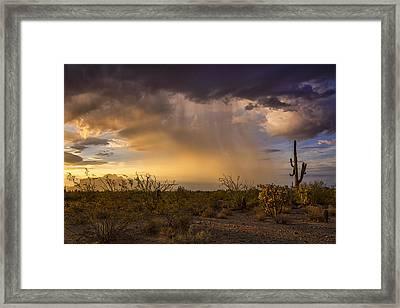 A Little Desert Rain  Framed Print