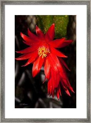 A Little Fire Framed Print by Christopher Holmes