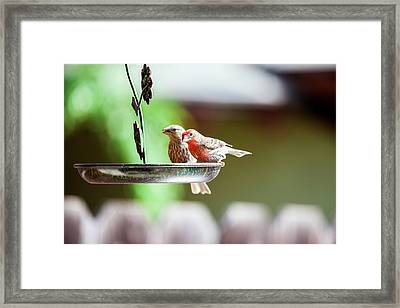 A Little Lunch Framed Print by Wade Courtney