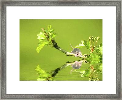 A Little Mouse Framed Print by Sharon Lisa Clarke