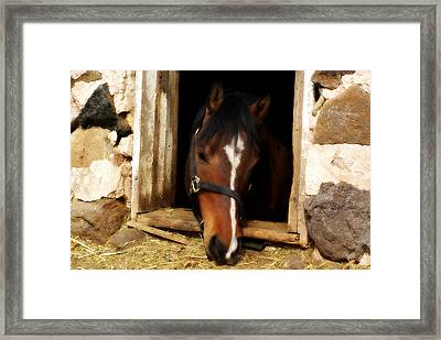 A Little Nibble Framed Print