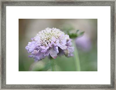 Just A Little Old Fashioned Framed Print by Connie Handscomb