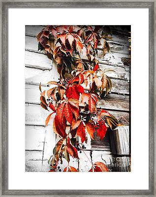 A Little Bit Of Red Framed Print by MaryLee Parker