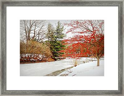 A Little Red On White Framed Print by Diana Angstadt