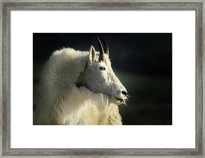 A Little Slip Of The Tongue Framed Print
