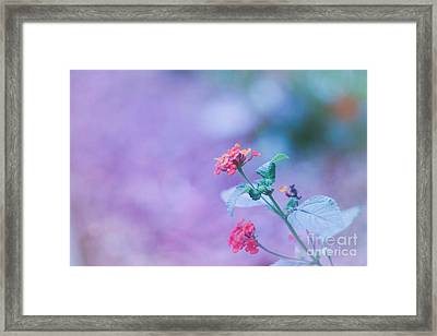 A Little Softness, A Little Color - Macro Flowers Framed Print