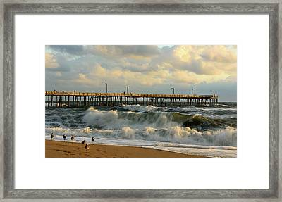 A Little Too Rough Framed Print