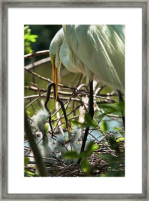 A Lively Lunch Framed Print by Christopher Holmes