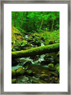 A Log Over Water Framed Print