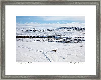 Framed Print featuring the photograph A Lone Buck Deer In Carbon County, Wyoming by Carol M Highsmith