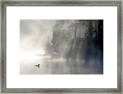 A Loon In The Mist Framed Print