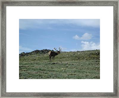A Lotta Bull Framed Print by Kelly Miller