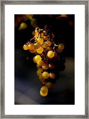 A Luscious Bunch Of Grapes Framed Print