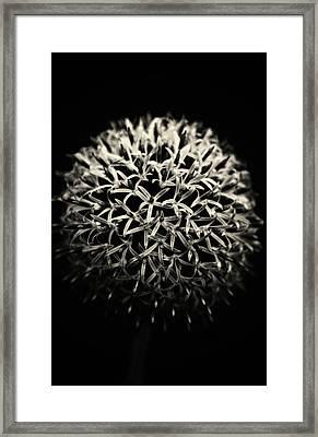 A Macro Flower Framed Print