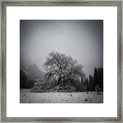A Magic Tree Framed Print by Lora Lee Chapman