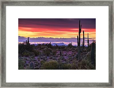 A Magical Desert Morning  Framed Print