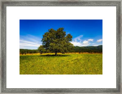 A Majestic White Oak Tree In Cades Cove - 1 Framed Print by Frank J Benz