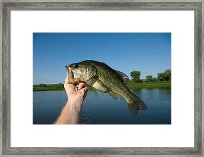 A Man Holds A Largemouth Bass Framed Print by Joel Sartore