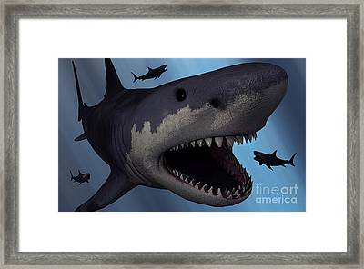A Megalodon Shark From The Cenozoic Era Framed Print by Mark Stevenson