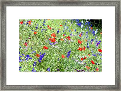 A Merrie Medley In Wildflowers Framed Print by ARTography by Pamela Smale Williams