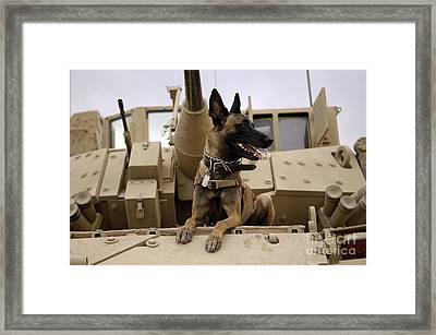 A Military Working Dog Sits On A U.s Framed Print