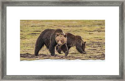 A Mini-mom And Yearling Framed Print