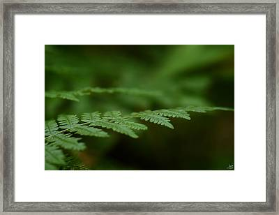 A Moment In The Forest Framed Print