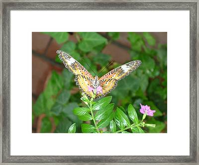 A Moment In Time Framed Print by Robyn Leakey