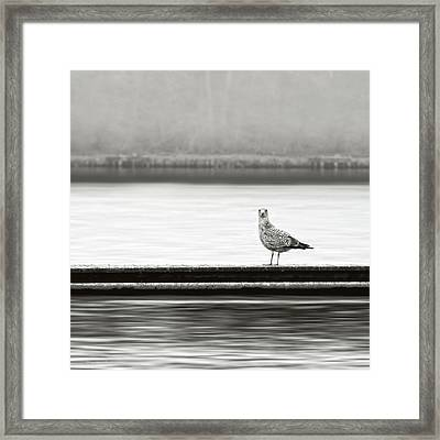A Moment In Time Framed Print by Wim Lanclus