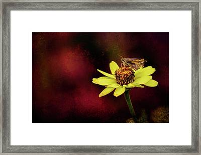 A Moment Of Rest Framed Print