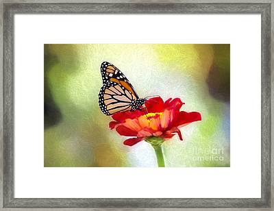 A Monarch Moment Framed Print
