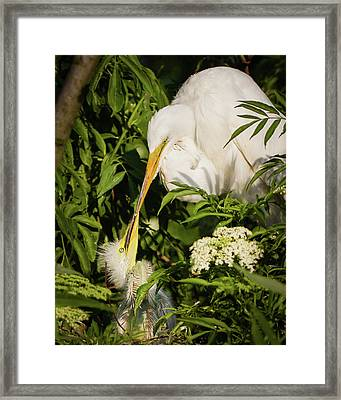 A Mothers Kiss Framed Print