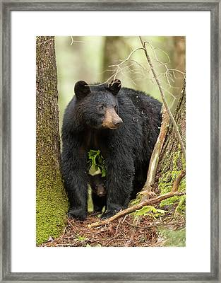 A Mothers Love Framed Print by Everet Regal