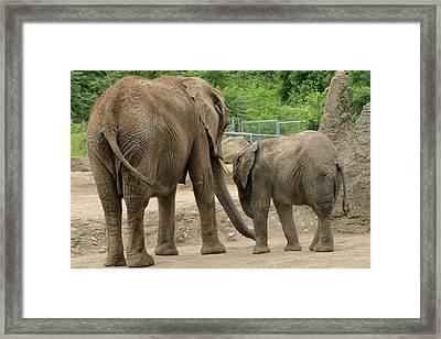A Mothers Love Framed Print by ShadowWalker RavenEyes Dibler