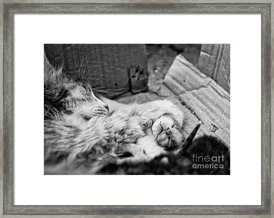 A Mother's Paw Framed Print