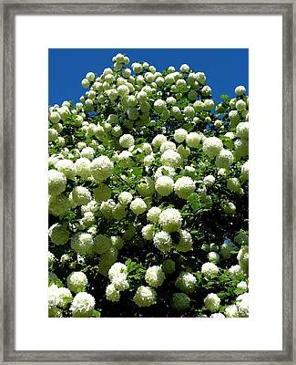A Mountain Of Snowballs Framed Print by Will Borden