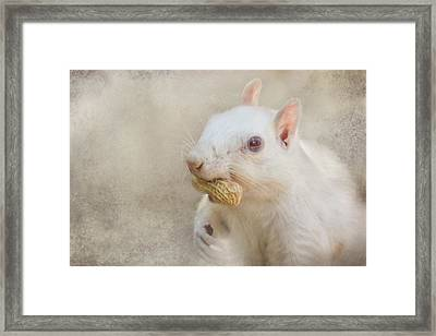 A Mouth Full Of Peanut Framed Print