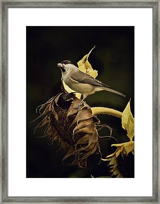 A Mouthful Framed Print