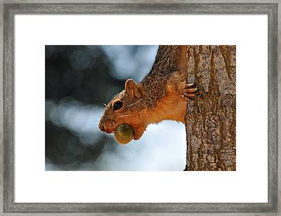 A Mouthful Framed Print by Teresa Blanton