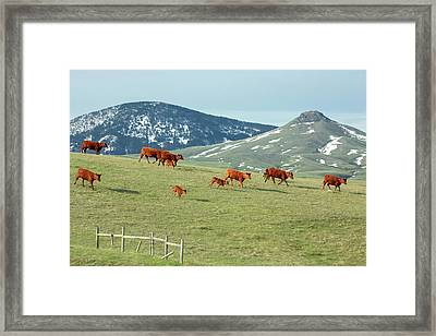 A Moving Herd Framed Print by Todd Klassy