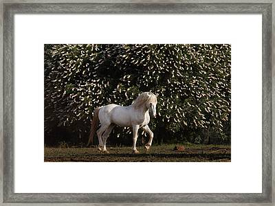 A Mustang Stallion In The Wild Horse Framed Print by Melissa Farlow