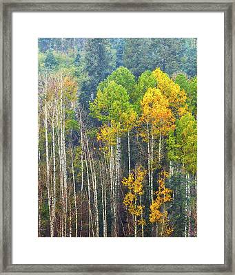 A Muted Fall Framed Print