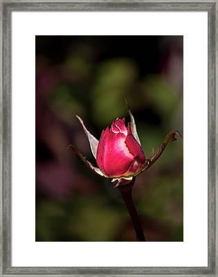 A New Beginning Framed Print by John Knapko
