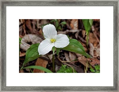 A New Bloom Framed Print