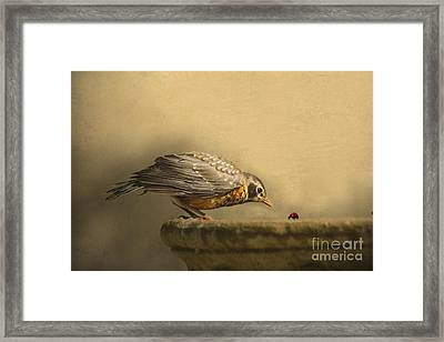 A New Day Framed Print by Jan Piller