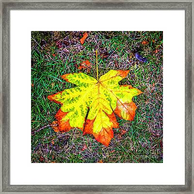 A New Leaf Framed Print