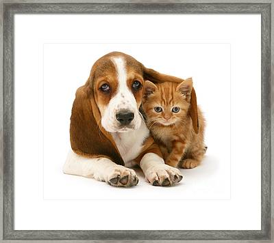 A New Meaning To Cat Flap Framed Print