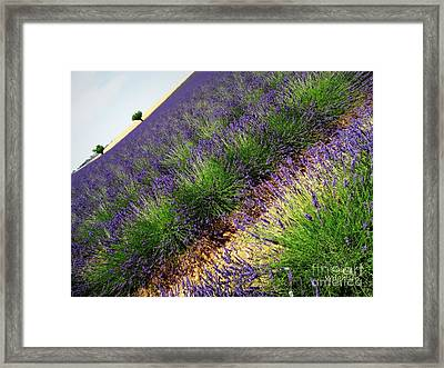 A New Slant On Life Framed Print