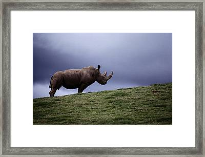 A Northern White Rhinoceros At The San Framed Print by Michael Nichols